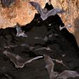 (sfx) Bats in a cave