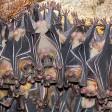 Bats in Cave (generic)