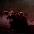 Return of the Jedi (1983) - Jabba/Crumb - (laugh)