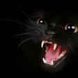 Cat Scream (generic)